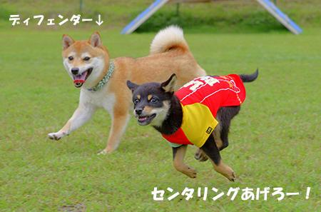http://file.udon.sakeblog.net/IMGP4061.jpg