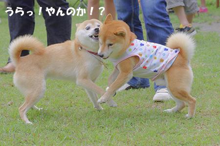 http://file.udon.sakeblog.net/kantamonta.jpg
