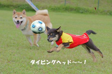 http://file.udon.sakeblog.net/mimaru01.jpg