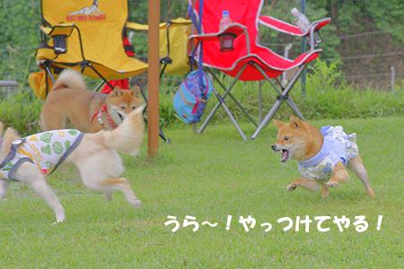 http://file.udon.sakeblog.net/pofight.jpg