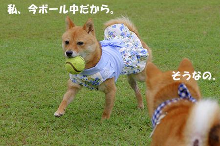 http://file.udon.sakeblog.net/ponbo-ru.jpg
