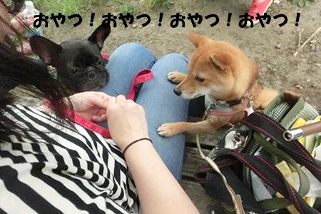http://blog.cnobi.jp/v1/blog/user/5372066eaa7f42ee290a4176dda1b356/1404390523