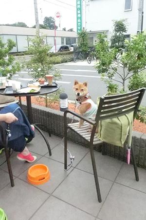 http://blog.cnobi.jp/v1/blog/user/5372066eaa7f42ee290a4176dda1b356/1404391638