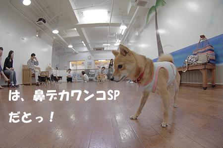 http://blog.cnobi.jp/v1/blog/user/5372066eaa7f42ee290a4176dda1b356/1405238091