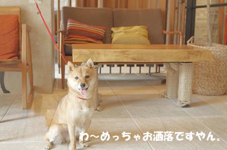 http://blog.cnobi.jp/v1/blog/user/5372066eaa7f42ee290a4176dda1b356/1405486079