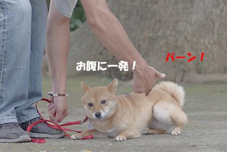 http://blog.cnobi.jp/v1/blog/user/5372066eaa7f42ee290a4176dda1b356/1405936163