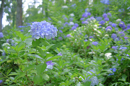 http://file.udon.sakeblog.net/IMGP4888.jpg