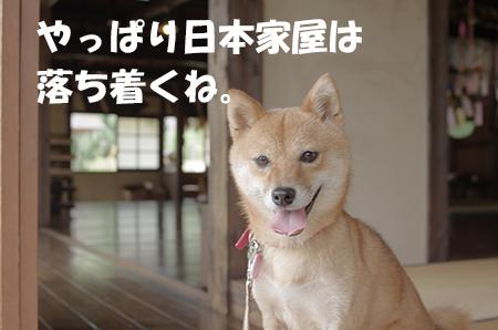 http://file.udon.sakeblog.net/IMGP4919.jpg