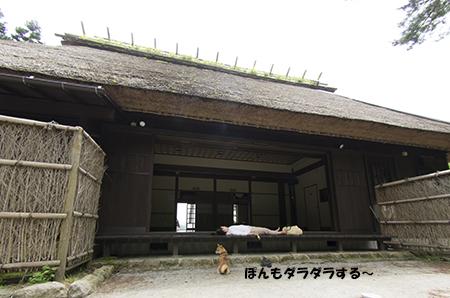 http://file.udon.sakeblog.net/IMGP4929.jpg