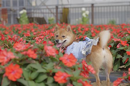 http://blog.cnobi.jp/v1/blog/user/5372066eaa7f42ee290a4176dda1b356/1406722186