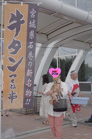 http://file.udon.sakeblog.net/ef7846ce.jpeg
