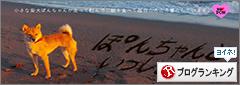 http://file.udon.sakeblog.net/banner.png