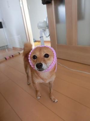 http://blog.cnobi.jp/v1/blog/user/5372066eaa7f42ee290a4176dda1b356/1407578910