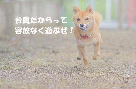 http://blog.cnobi.jp/v1/blog/user/5372066eaa7f42ee290a4176dda1b356/1407756986