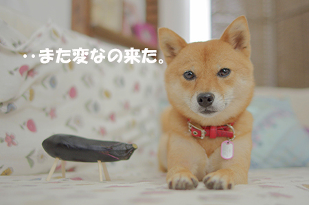 http://blog.cnobi.jp/v1/blog/user/5372066eaa7f42ee290a4176dda1b356/1408000829
