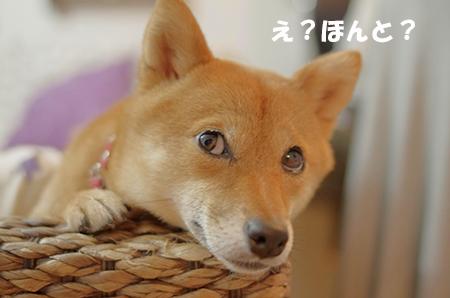 http://file.udon.sakeblog.net/IMGP5221.jpg