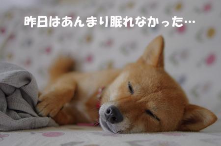 http://file.udon.sakeblog.net/af769c5c.jpeg