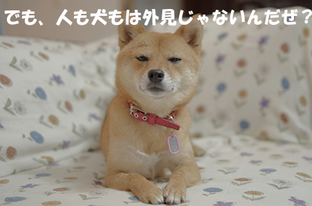 http://blog.cnobi.jp/v1/blog/user/5372066eaa7f42ee290a4176dda1b356/1408883557