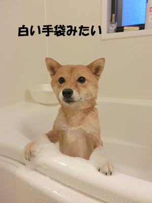 http://blog.cnobi.jp/v1/blog/user/5372066eaa7f42ee290a4176dda1b356/1409288518