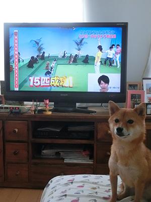 http://file.udon.sakeblog.net/CIMG1393.jpg