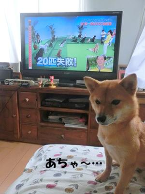 http://file.udon.sakeblog.net/CIMG1394.jpg