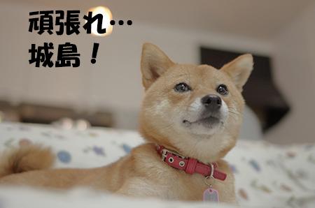 http://file.udon.sakeblog.net/IMGP5313.jpg