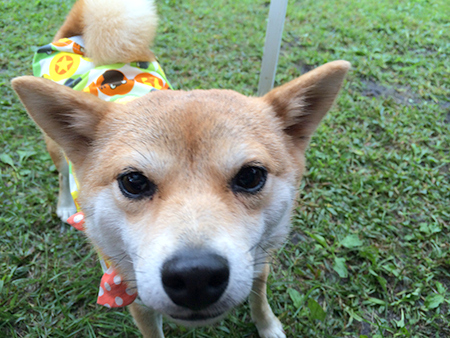 http://blog.cnobi.jp/v1/blog/user/5372066eaa7f42ee290a4176dda1b356/1410076196