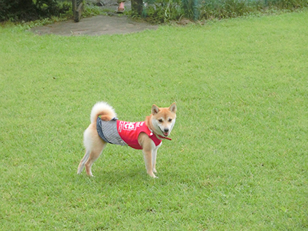 http://file.udon.sakeblog.net/CIMG1427.jpg