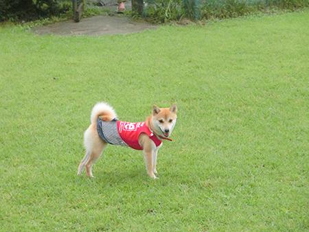 http://blog.cnobi.jp/v1/blog/user/5372066eaa7f42ee290a4176dda1b356/1410076201