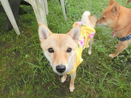 http://file.udon.sakeblog.net/CIMG1437.jpg