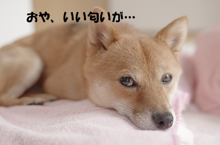 http://blog.cnobi.jp/v1/blog/user/5372066eaa7f42ee290a4176dda1b356/1410771015