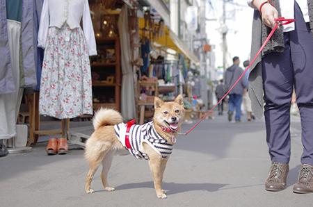 http://file.udon.sakeblog.net/IMGP5848.jpg