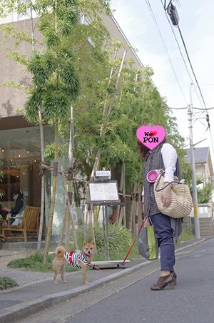 http://file.udon.sakeblog.net/IMGP5849.jpg