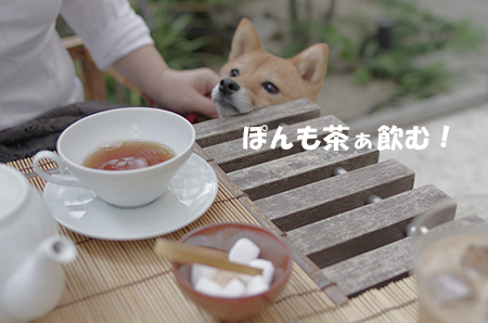 http://blog.cnobi.jp/v1/blog/user/5372066eaa7f42ee290a4176dda1b356/1411035936
