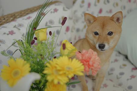 http://blog.cnobi.jp/v1/blog/user/5372066eaa7f42ee290a4176dda1b356/1411291034