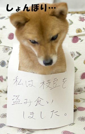 http://file.udon.sakeblog.net/IMGP5930.jpg