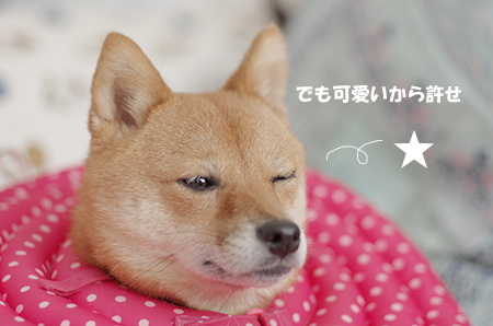 http://file.udon.sakeblog.net/IMGP5727.jpg