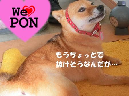 http://file.udon.sakeblog.net/CIMG1368.jpg