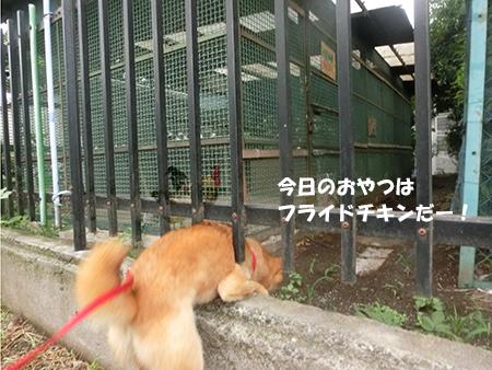 http://file.udon.sakeblog.net/CIMG1359.jpg