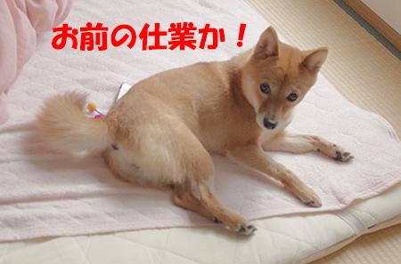 http://blog.cnobi.jp/v1/blog/user/5372066eaa7f42ee290a4176dda1b356/1412817840