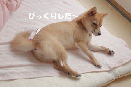 http://file.udon.sakeblog.net/IMGP6046.jpg