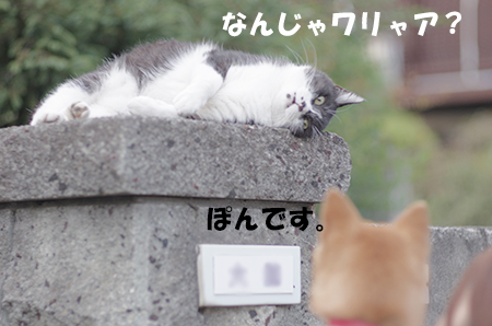http://file.udon.sakeblog.net/IMGP6093.jpg
