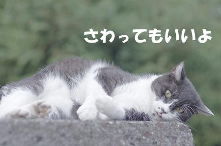 http://file.udon.sakeblog.net/IMGP6091.jpg