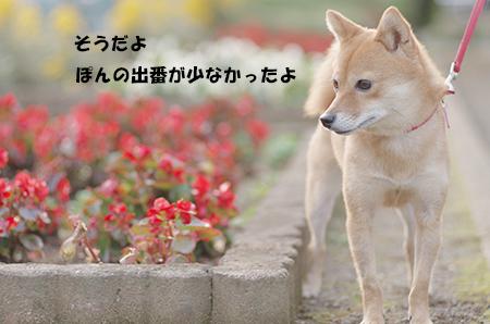 http://file.udon.sakeblog.net/IMGP6082.jpg