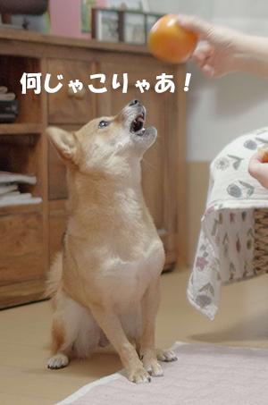 http://file.udon.sakeblog.net/d32d2127.jpeg