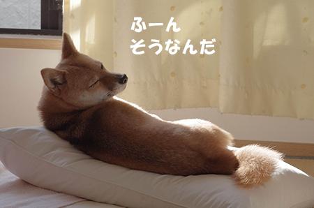 http://file.udon.sakeblog.net/IMGP6182.jpg