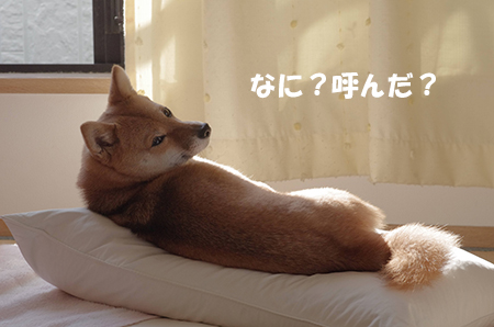 http://blog.cnobi.jp/v1/blog/user/5372066eaa7f42ee290a4176dda1b356/1413697513