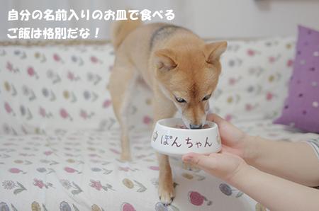 http://file.udon.sakeblog.net/IMGP6196.jpg