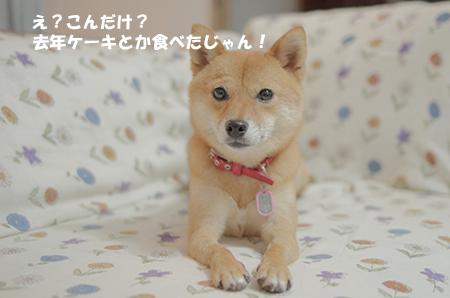 http://file.udon.sakeblog.net/IMGP5281.jpg