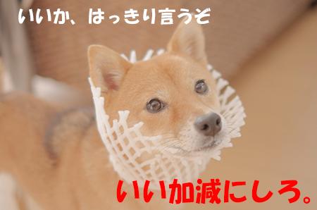 http://file.udon.sakeblog.net/IMGP6242.jpg